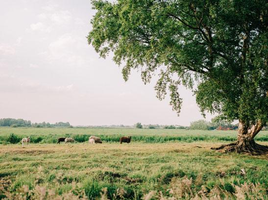 Weiland uitzicht met schapen
